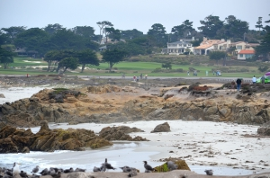 Am Strand von Pebble Beach